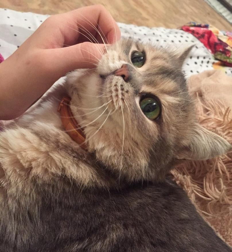 Потерялся кот Малыш