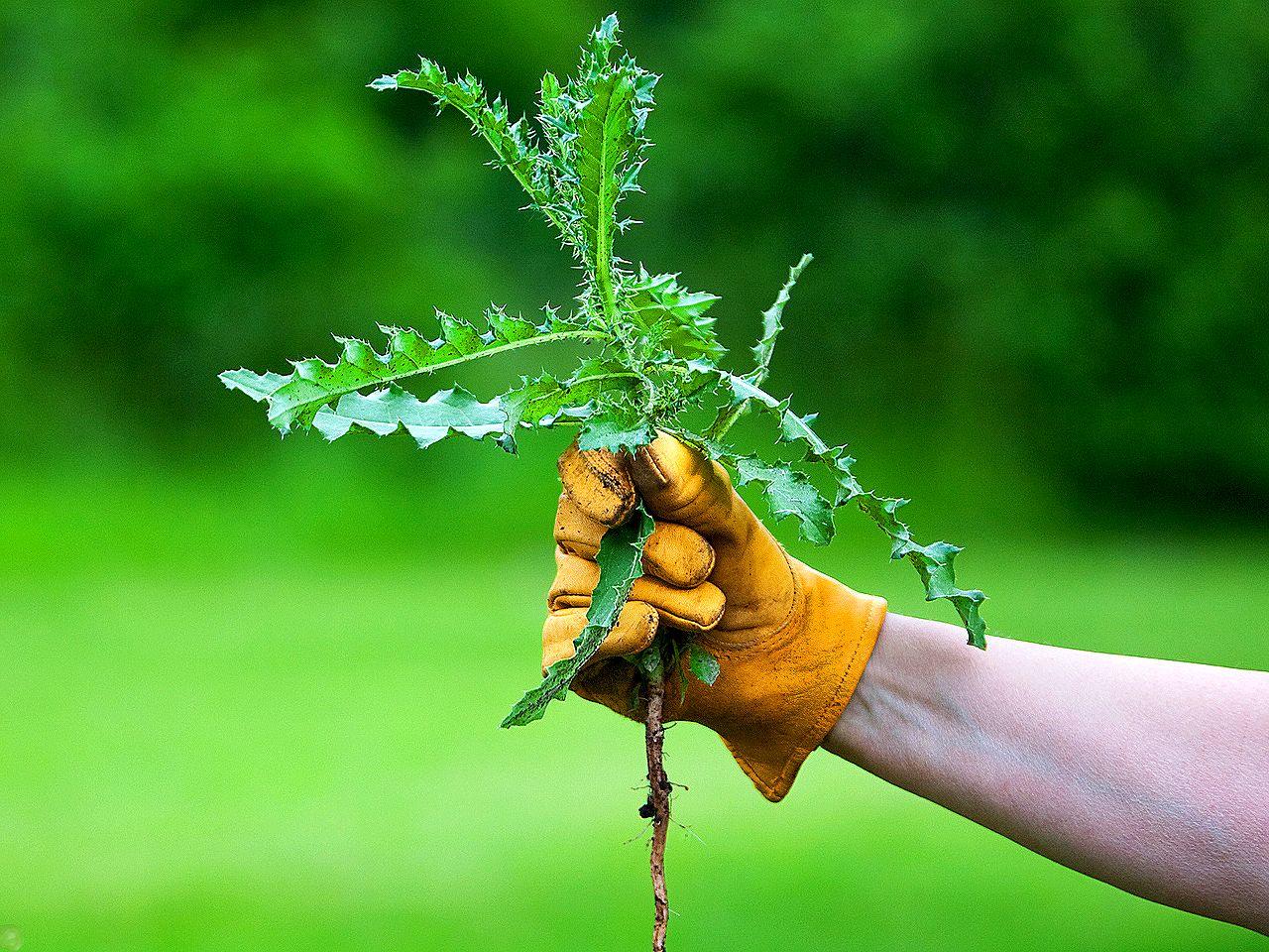 Прополоть сорняки в цветнике ( част...
