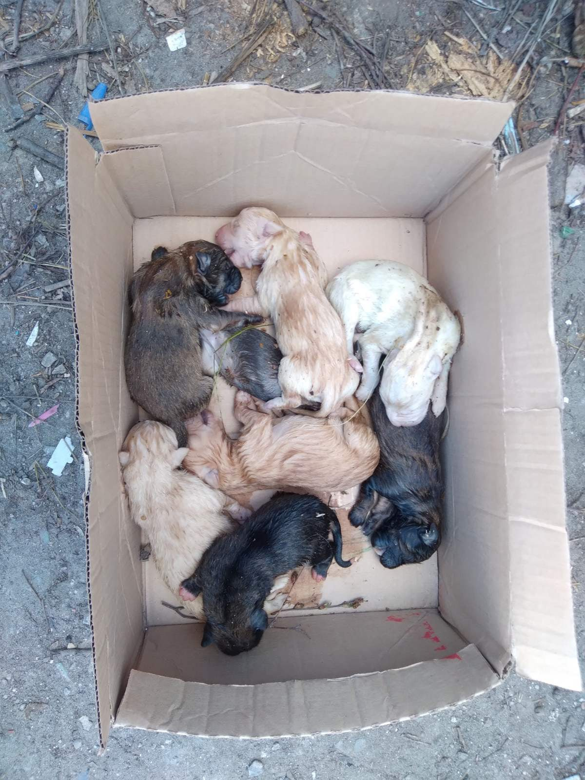 Помогите новорожденным щенятам