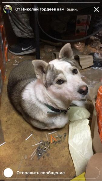 Помощь пункту передержки для бездомных собак