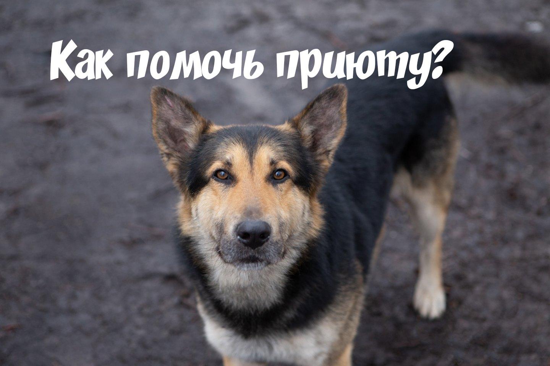 Помощь приюту для собак (корм, лекарства, помощь руками, автоволонтеры)