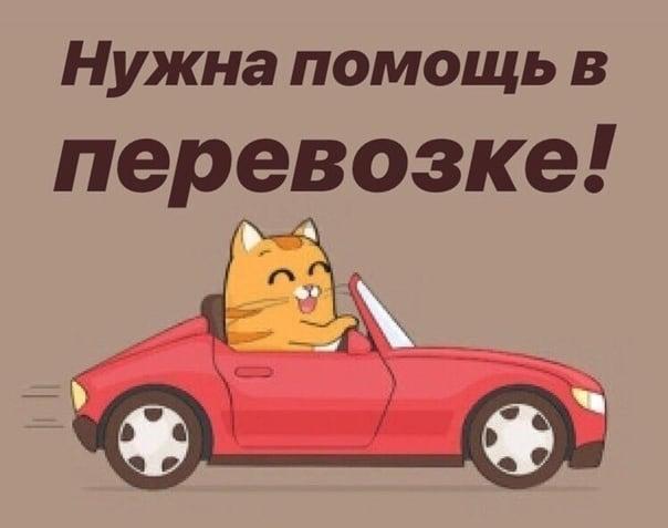 Помощь в перевозке в Новокузнецк.