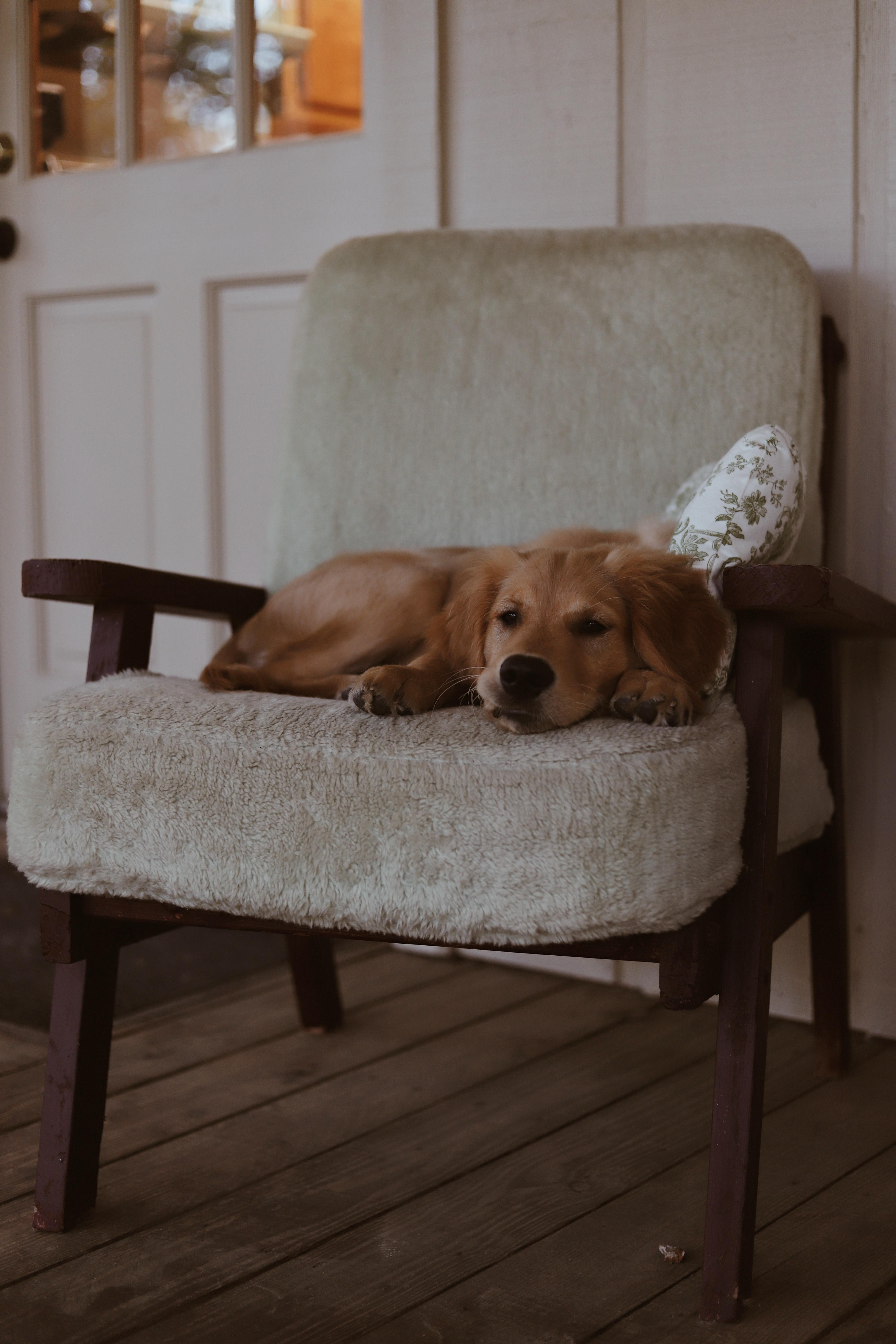 Кресло для собак