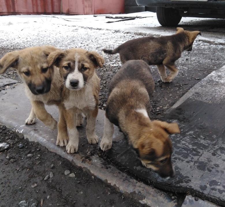 Ищем дом для щенков