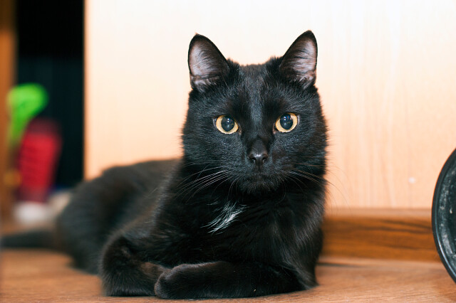 Пропал чёрный котик
