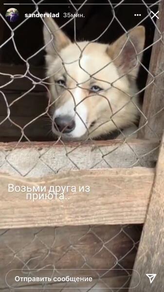 Помощь приюту для Животных в селе Елшанка