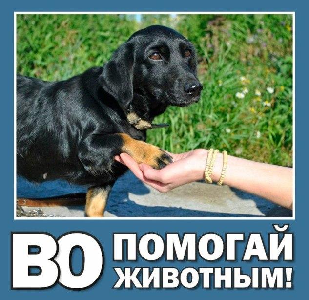 """ВО """"Помогай животным"""" просит помощи"""